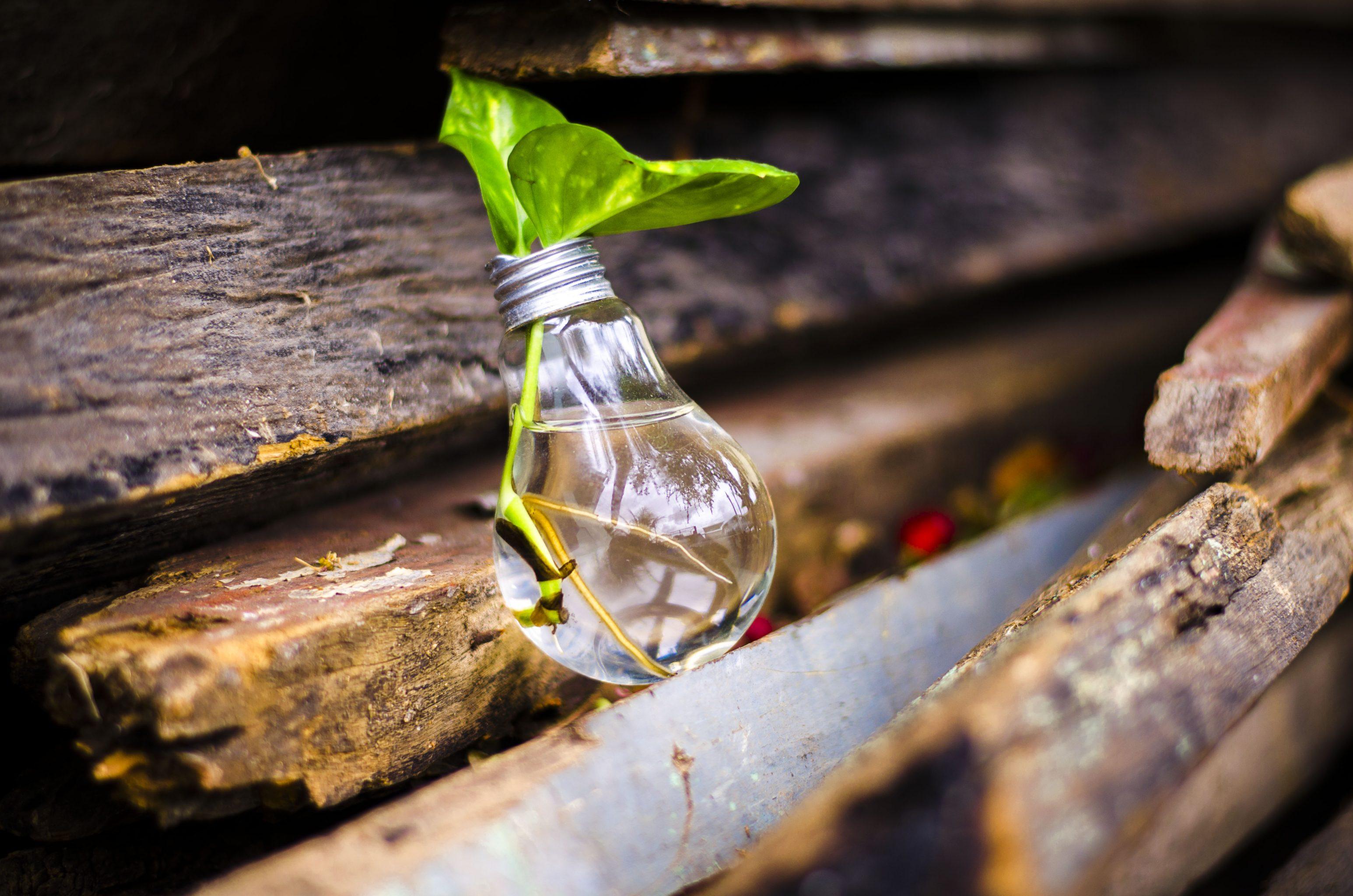 The Best 10+ Practical Green Tips for Aspiring Eco-Moms