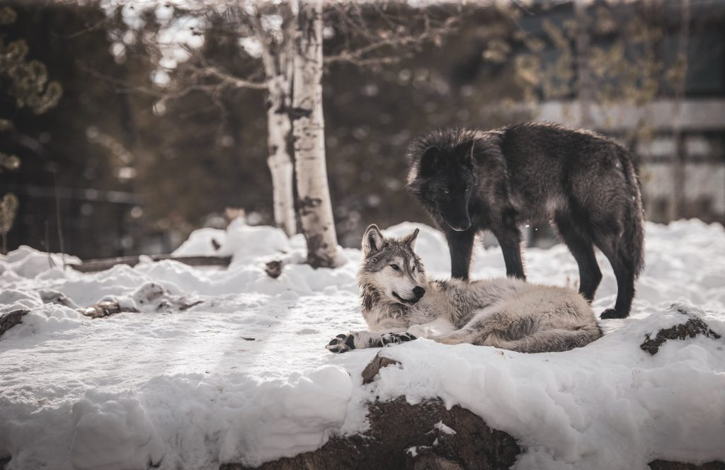 Have You Told Your Kids this Powerful Two Wolves Story?
