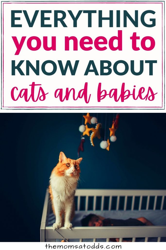 What Cat Owners Have to Know When Expecting a Baby